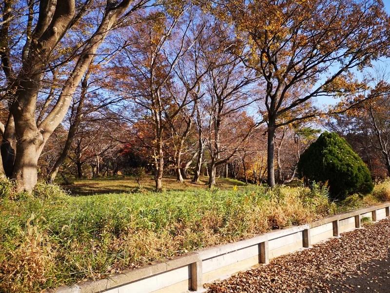 泉自然公園までの道01