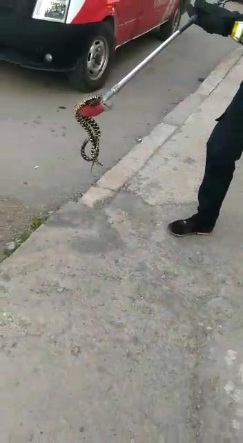 Apartman bahçesindeki yılanı itfaiye yakaladı