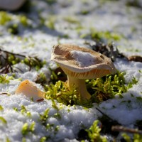 """Folly On, Folly On"""