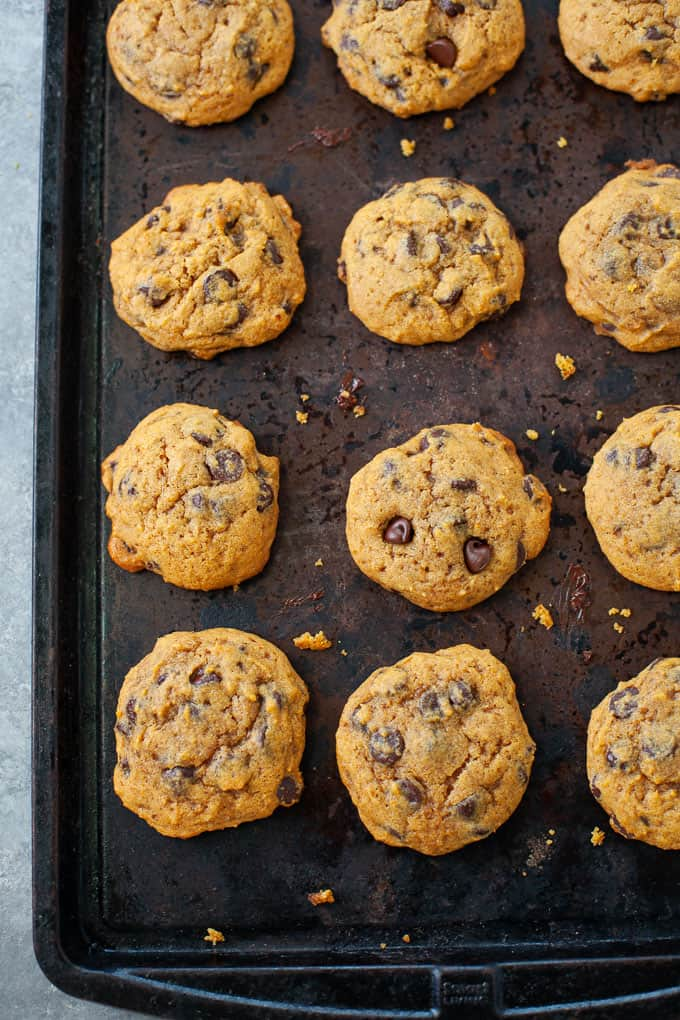 dozen chocolate chip pumpkin cookies