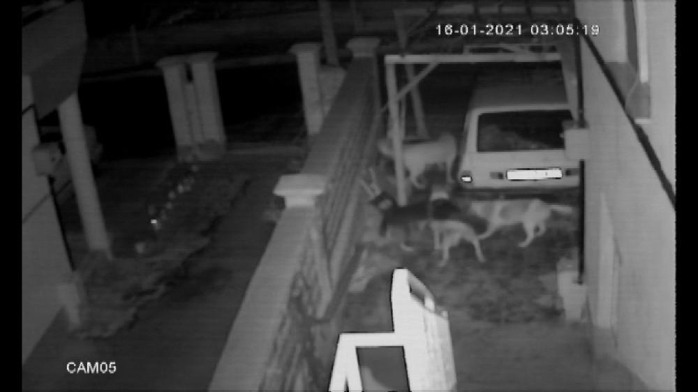 Sokak köpeklerinin kediye saldırması kameraya yansıdı