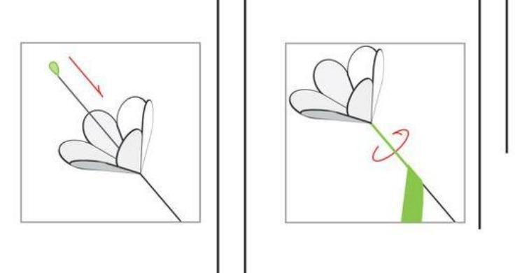 Paper Flowers & # 8212; Mga scheme at mga template para sa paglikha ng mga kulay ng papel na yugto 6.