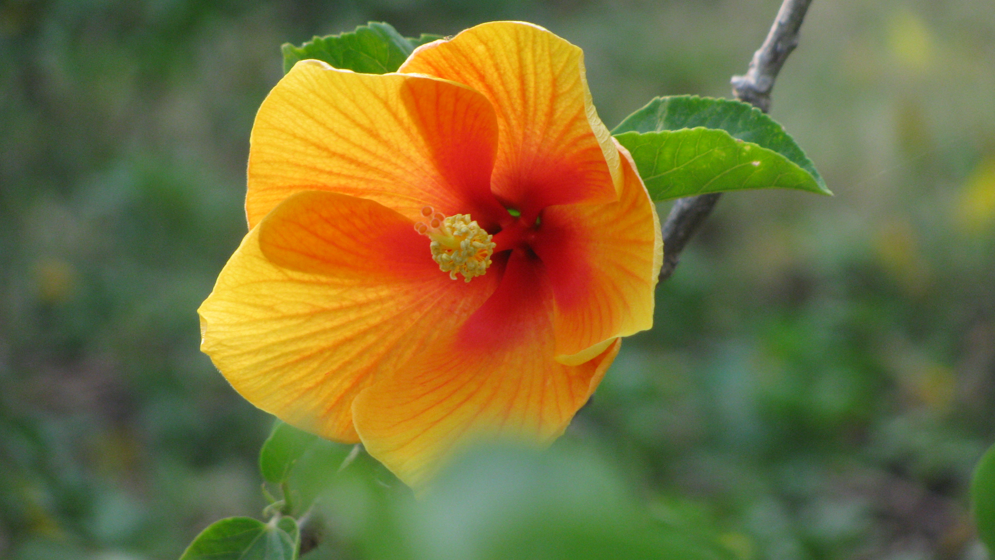 A Flower For Your Desktop