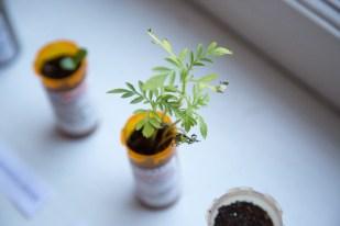 Grow Op Exhibit - High Res-61 @liamcoo