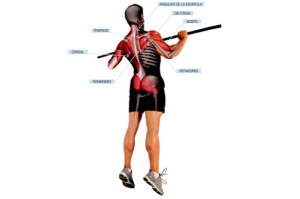 estabilizadores-profundos-musculares_thumb_e
