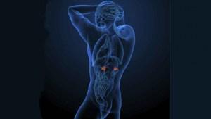 article-quimica-deportista-hormonas-rendimiento-5475a068177f2