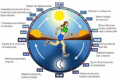 FísicoCiclos Acondicionamiento Reloj Claves CirdacianosLas De Tu c5AjqR4S3L