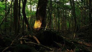 160112231128_japan_aokigahara_forest_624x351_juliancolton_nocredit
