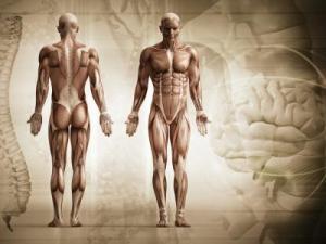 defectos-cuerpo-humano_0