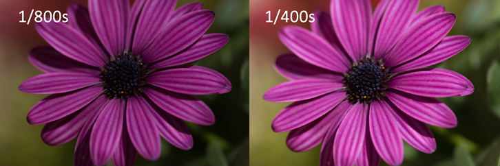 Left: under exposed photo of a flower taken at a shutter speed of 1/800th of a second. Right: Corrected the exposure by shooting at 1/400th of a second.
