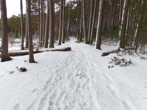 Snowy Path: karenattfield.com maintenance mode screen