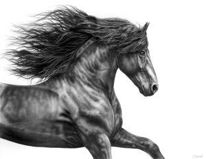 Pferdeportrait Energie