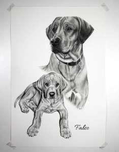 Collage Zeichnung Hund