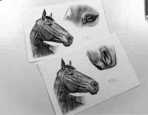 Collagenzeichnung Pferd