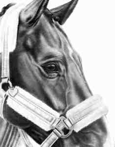 Details Pferdezeichnung