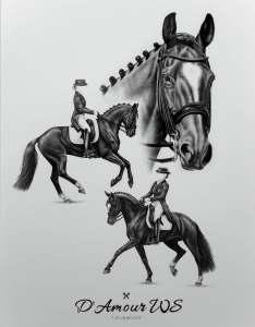 Dressurpferd Zeichnung