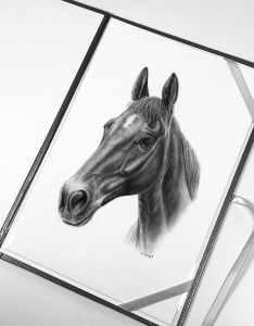 Pferde Portrait
