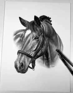 Pferdekopf gezeichnet mit Bleistift