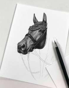 Pferdekopf nach Foto zeichnen