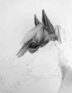 Pferdezeichnung Entstehung