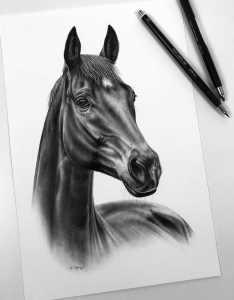 Pferdezeichnung in Auftrag geben