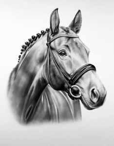 Pferdezeichnung nach Foto