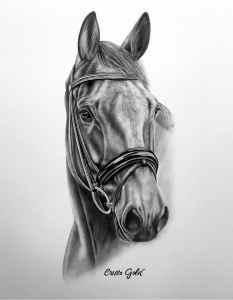 Portrait Pferdekopf gezeichnet