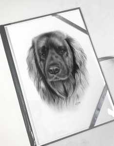 Portraitzeichnung Hund Langhaar