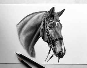 Zeichnung Pferd Kandare