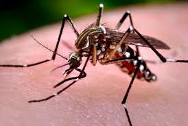 Dept of Health dropping the ball on Big Island dengue?