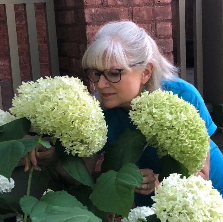 Hydrangea flowers as big as my head