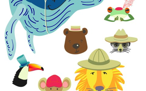 The 100 Days of Animals in Hats