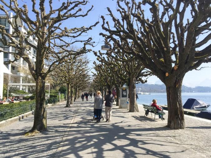 Cool Tree Pathway Luzern