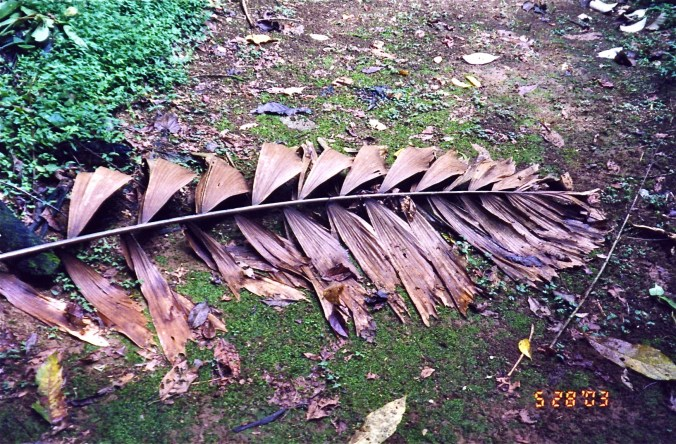 Leaf Litter Costa Rica