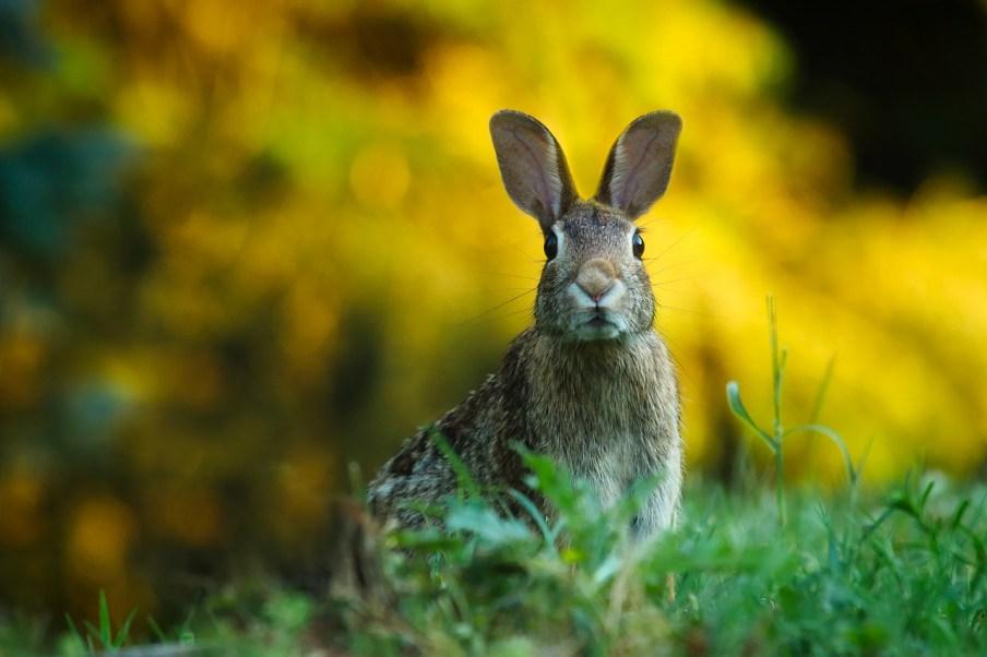 a rabbit on high alert