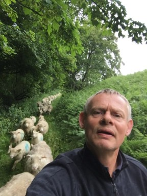 Martin Clunes and his sheep