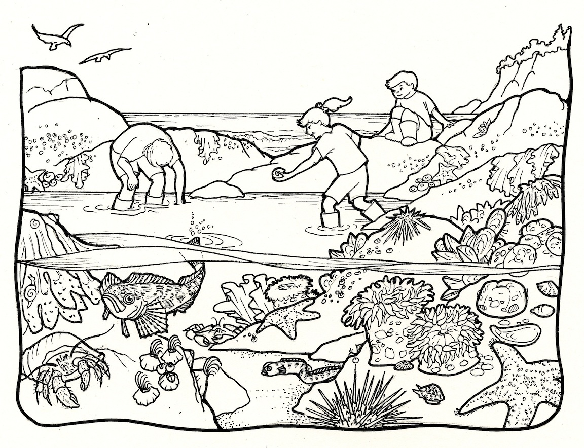 Wetland Ecosystems Coloring Page Coloring Pages