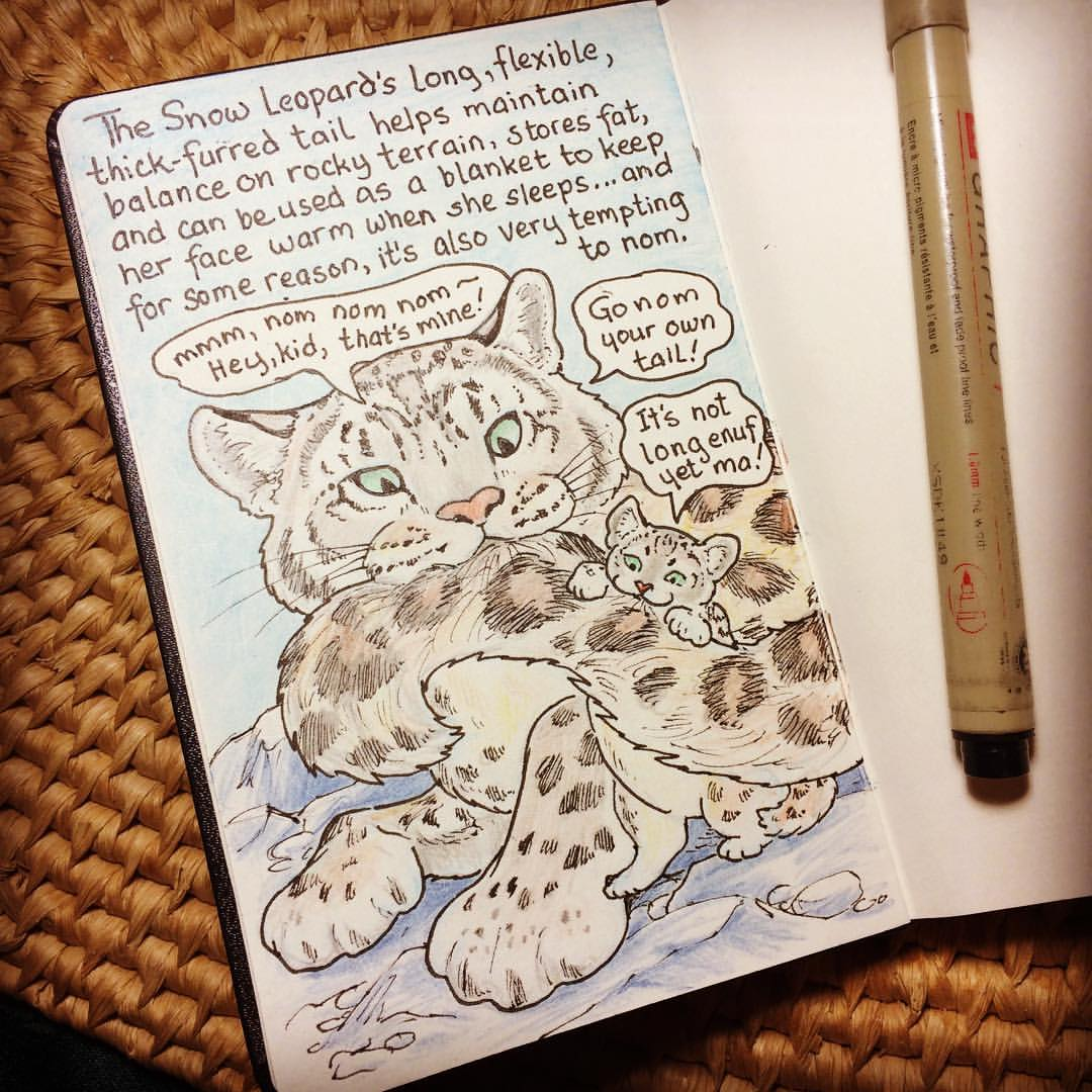Drawing the Snow Leopard