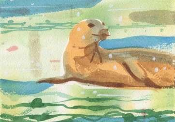 Seal-on-Looker-karen-hibbard-2018