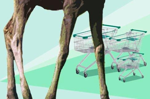 shoppin_digitalmoose