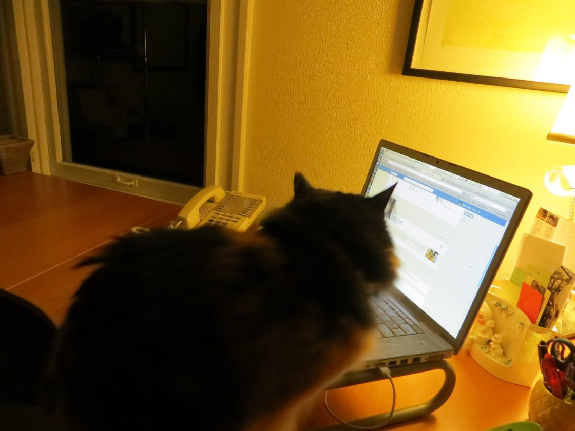 Maddie the Cat, Who Is The Second Most Valuable Beta Reader? https://karenhugg.com/2015/12/19/writer-friends #writing #betareader #writing #feedback