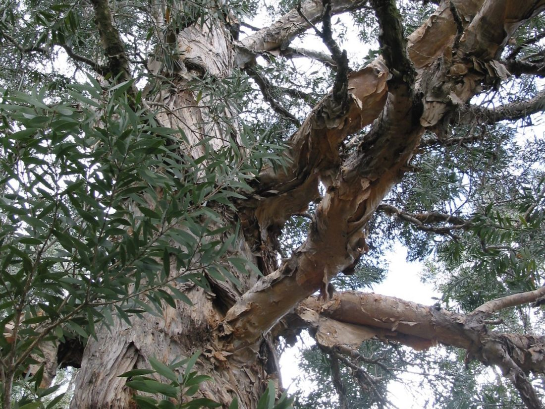 Eucalyptus Tree, Might and Main Monday: Ann Patchett, Karen Hugg, https://karenhugg.com/2018/06/22/ann-patchett #writing #inspiration #fiction #novels #books #annpatchett