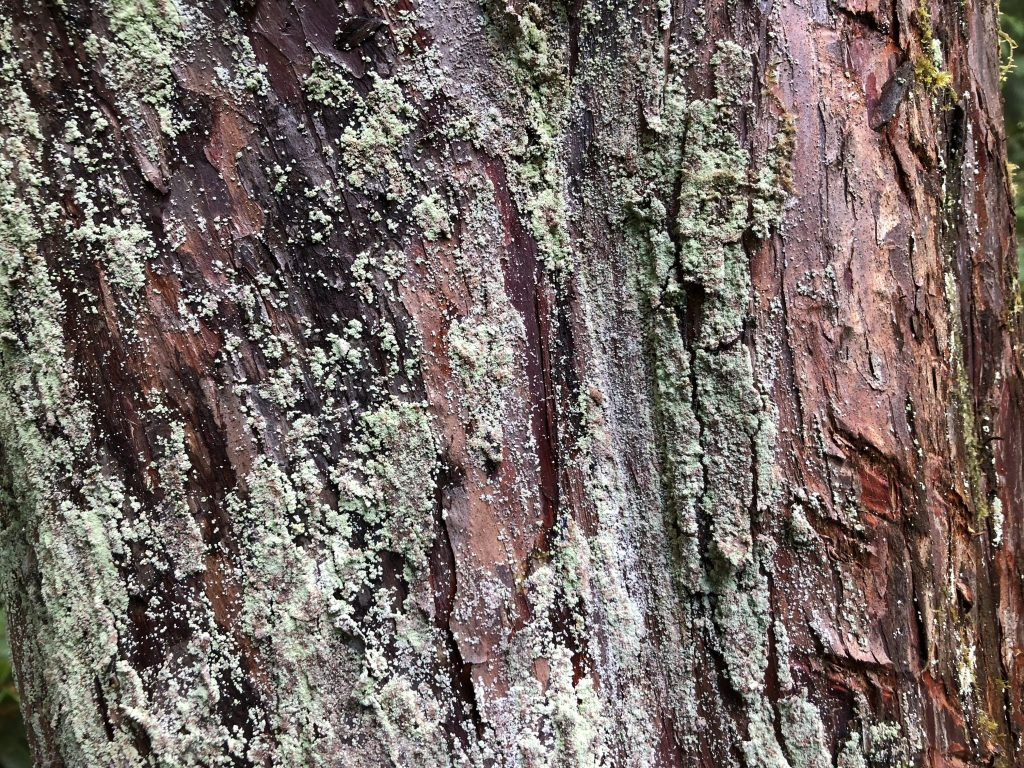 Hemlock Bark, Karen Hugg, www.karenhugg.com #trees #bark #lichen