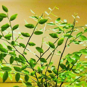 A Quiet, Steady Glow, Short Story, Karen Hugg, www.karenhugg.com, #fiction #plants #books #writing #speculativefiction