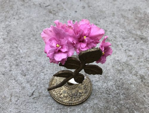 Pink African Violet, Why a Novel About a Flower That Makes You Forget? Part 2, Karen Hugg, https://karenhugg.com/2018/07/27/novel-about-a-flower-2 #writing #novel #books #AfricanViolet #gardening #plants
