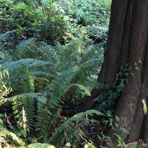 Plants Are Speaking Right Now, Probably in Your Backyard, Karen Hugg, https://karenhugg.com/2018/11/26/plant-sounds/ #plantsounds #trees #forest #bioacoustics #novel #books #SongoftheTreeHollow