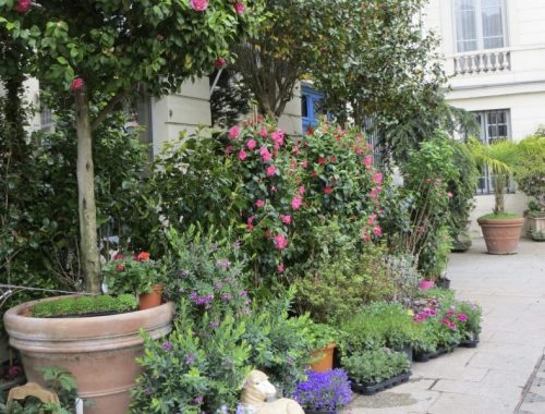 Paris Plant Shop, How Little Plant Shops Inspired a Big Paris Dream, Karen Hugg, https://karenhugg.com/2019/01/16/plant-shops/ #Paris #plantshop #novels #books #TheForgettingFlower