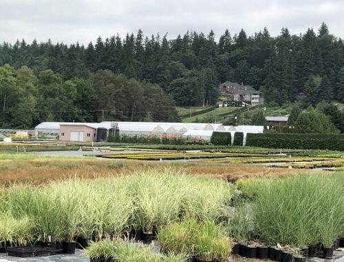 Greenhouses, How I Found New Inspiration at a Familiar Nursery, Karen Hugg, https://karenhugg.com/2019/05/29/nursery #wholesale #plants #nursery #growers #greenhouse #gardening #gardendesign