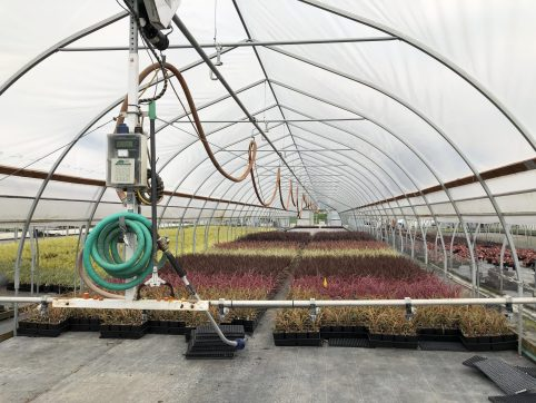 Sprinkler in Greenhouse, How I Found New Inspiration at a Familiar Nursery, Karen Hugg, https://karenhugg.com/2019/05/29/nursery #wholesale #plants #nursery #growers #gardening #gardendesign
