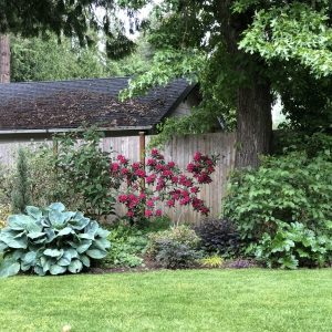 Shaded Sunny Border, How to Garden in a Shaded Sunny Border, Karen Hugg, https://karenhugg.com/2019/06/07/shaded-sunny-border/ #gardening #plants #shade #sun #border #garden #soil #clay